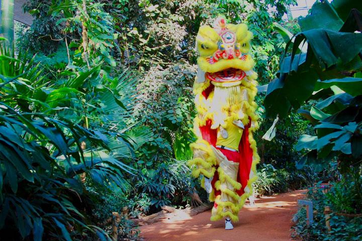 Löwentanz Auftritt im Tropenhaus